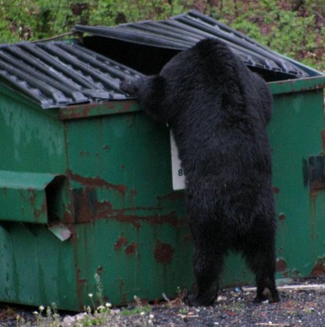 dumpster-bear-636x640.jpg