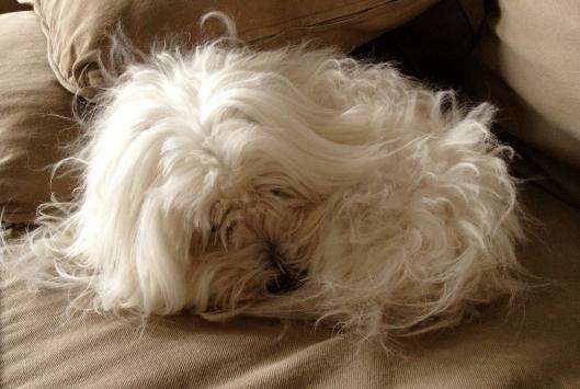 chopin sleeping