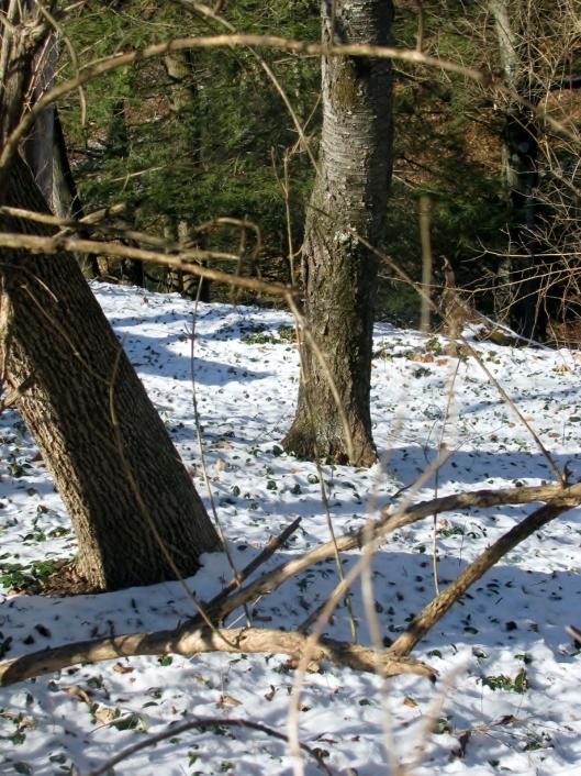 woods snow 2